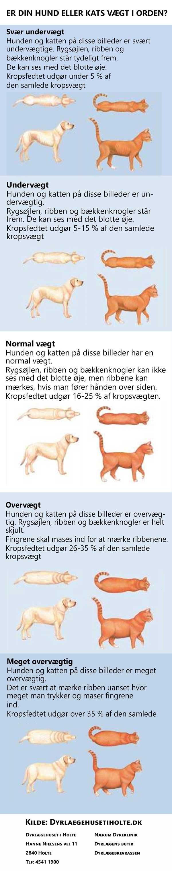 Er din hund eller kats vægt i orden?