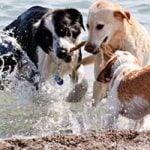 Hvor skal din hund holde sommerferie?