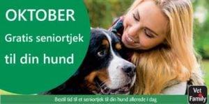 Bestil tid til gratis seniortjek til din hund