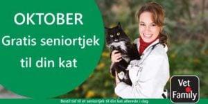Bestil tid til gratis seniortjek til din kat