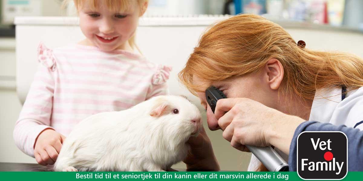 Bestil tid til seniortjek af kanin eller marsvin