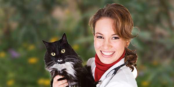 Bestil tid til seniortjek til din kat