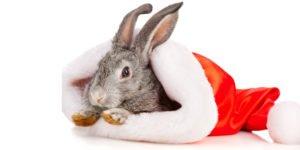 Fodring af gnavere til jul
