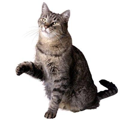 Viser din kat tegn på stress?