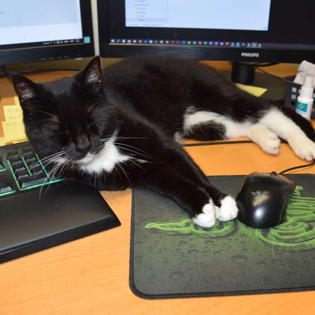 Katte kan øremærkes eller få en chip for at blive registreret