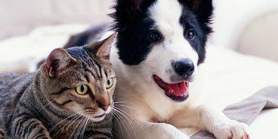 Adfærdsproblemer for hunde og katte