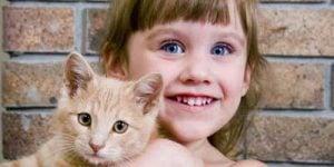 Allergi hos katte
