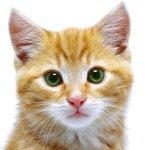 Din kats hud