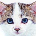 Din kats nyrer