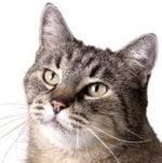 Senior kat