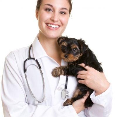 Sygdomsdiæter hund