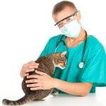 Vitaminer kat