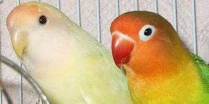 Den syge fugl