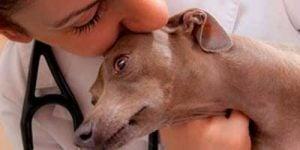 Diskusprolaps hos hunde