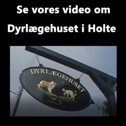 En dag i Dyrlægehuset i Holte - video