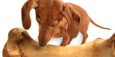 hjemmelavet hundemad allergi