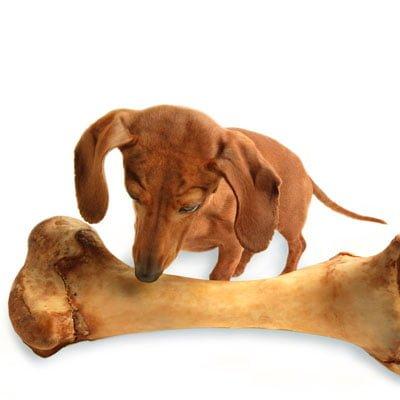 Hundefoder og hundemad