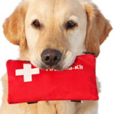 Førstehjælp til dyr