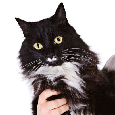 Hornhindelidelser hos hunde og katte
