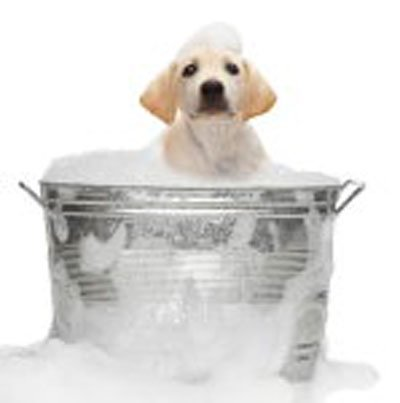 Hudparasitter hos hunde og katte