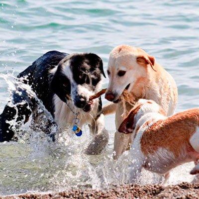 Motion er vigtigt for din hunds velvære