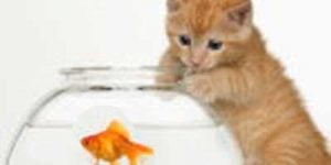 Kattemad og kattefoder