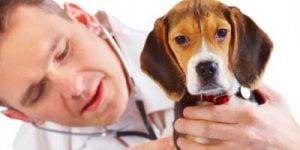 Krampe hos hunde