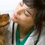 Livmoderbetændelse hos hunde