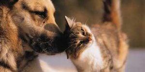 Nyrelidelser hos hunde og katte