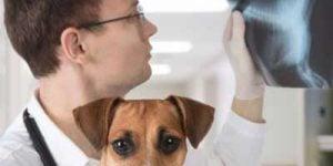 Opkastning og diarré hos hunde