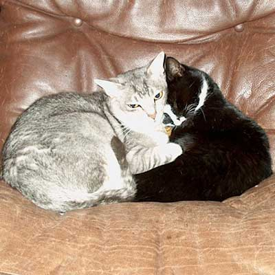 Parasitter i tarmen hos hunde og katte