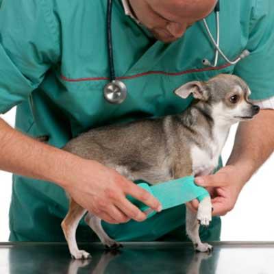 Skader i knæleddet hos hunde