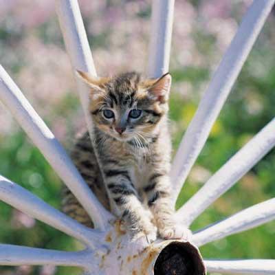 Vaccination af katte