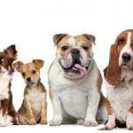Valg af hund