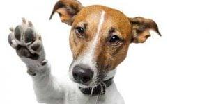 Vokseværk hos hunde